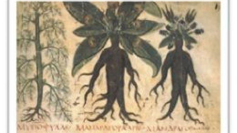 Tıp dünyasının ilk bilim insanları