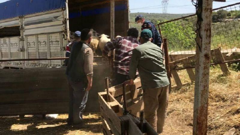 Koyunlarına iyi bakmayan çiftçiye 9 ay ev hapsi verildi