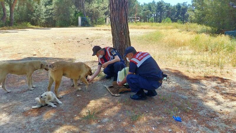 Jandarma ormanda yaşayan hayvanları unutmadı