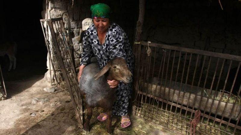 Keçiler yoksulluğa çare olacak