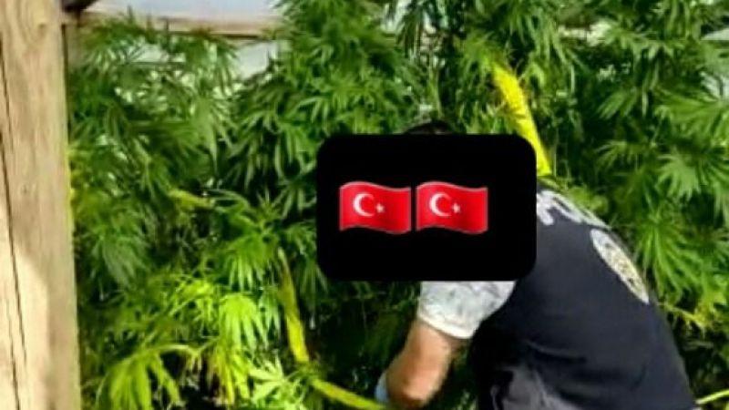 Diyarbakır'da ele geçirilen kenevir bitkisi 7 milyonu aştı