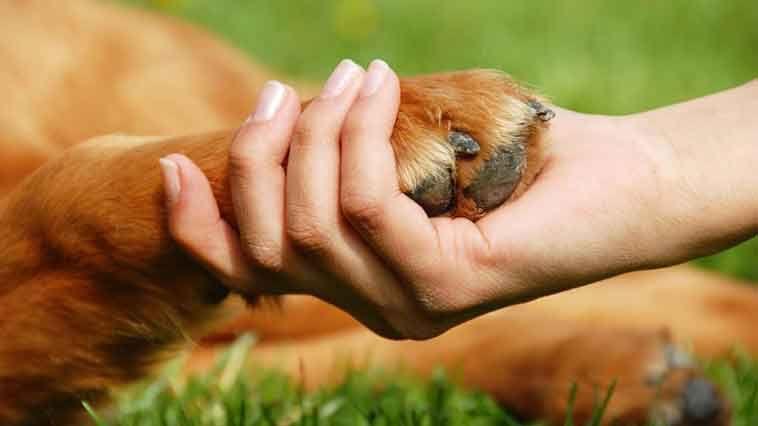 Hayvanları koruma düzenlemesi yasalaştı