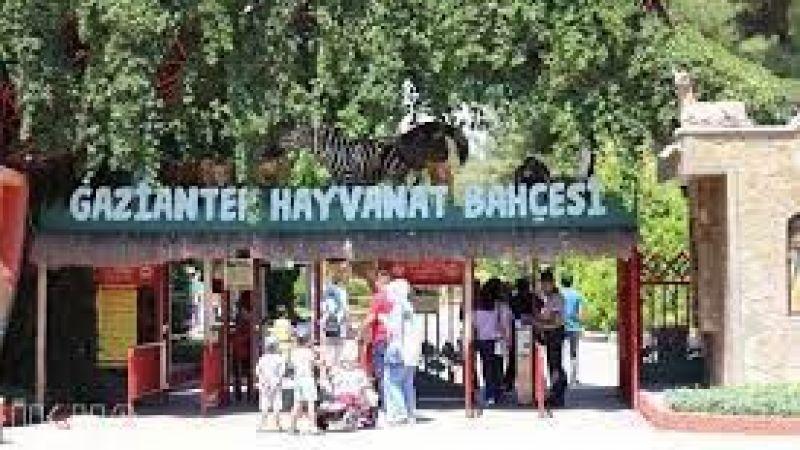Gaziantep'te kafesinden kaçan aslan bakıcısını yaraladı