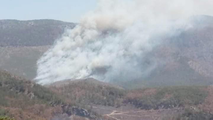 Orman yangınları son 18 yılın rekor karbonunu saldı