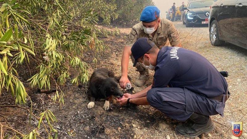 Jandarma 1375 personelle yangın bölgelerinde