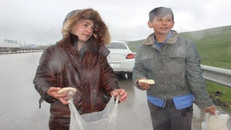 Erzurum'da mantar satan çocukların yağmur altında ekmek parası mücadelesi