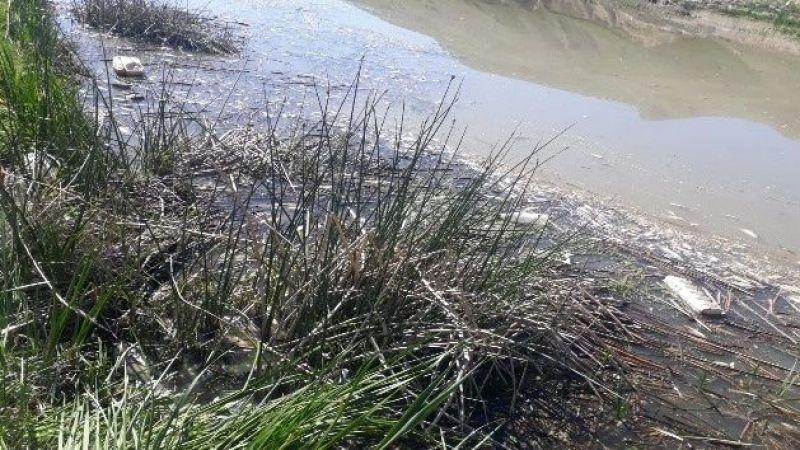 Karasu'da binlerce balık telef oldu