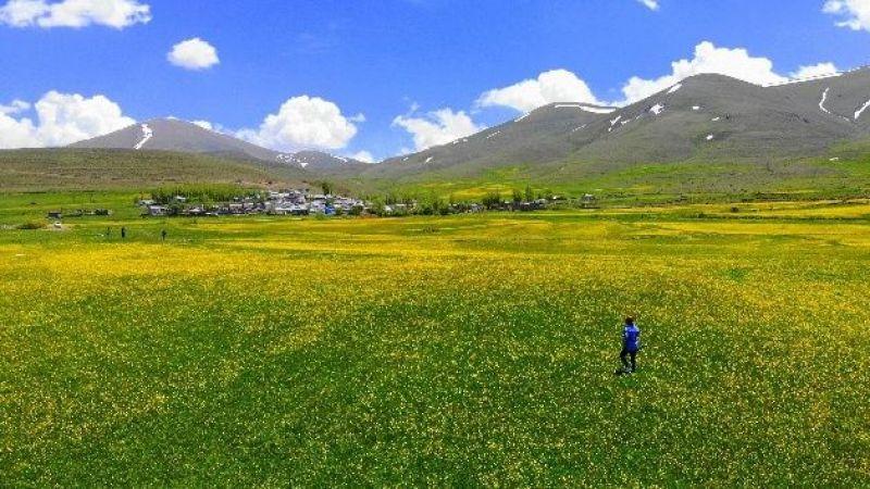 Baharın gelmesiyle Mayıs çiçekleri Erzurum'u sarıya bürüdü