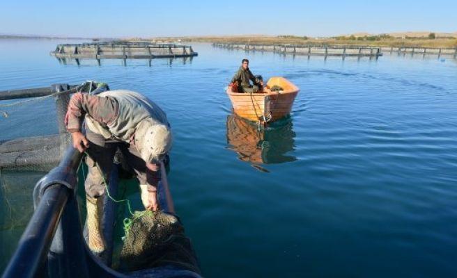 Bozkır kenti Şanlıurfa'da balıkçılık gelişiyor