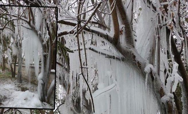 Şanlıurfa'da ağaçlar buz tuttu