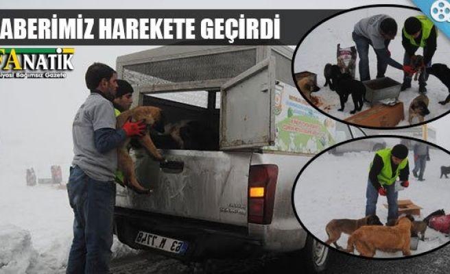 URFANATİK yazdı, sokak hayvanları hatırlandı