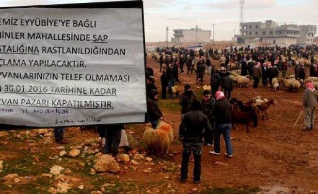 Şanlıurfa hayvan pazarı karantinaya alındı