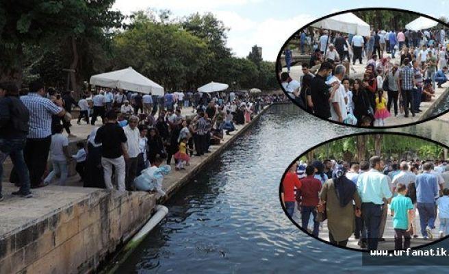 Urfa'da binlerce kişi Balıklıgöl'e akın etti