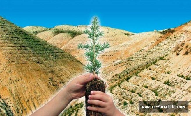 Şanlıurfa'da 193 Bin 670 Dekar Alanda Ağaçlandırma