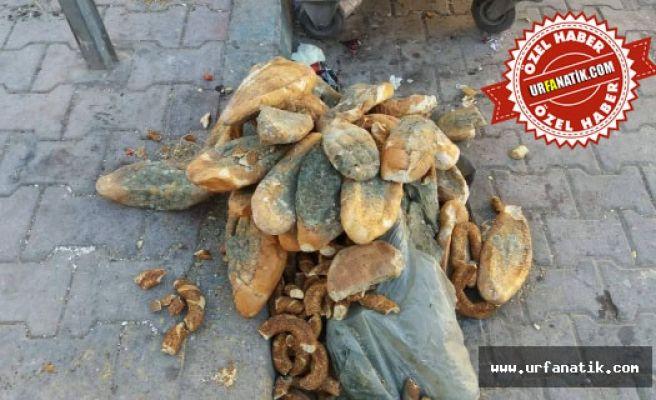 Bir Yığın Ekmek Çöpe Atıldı, Büyük tepki topladı