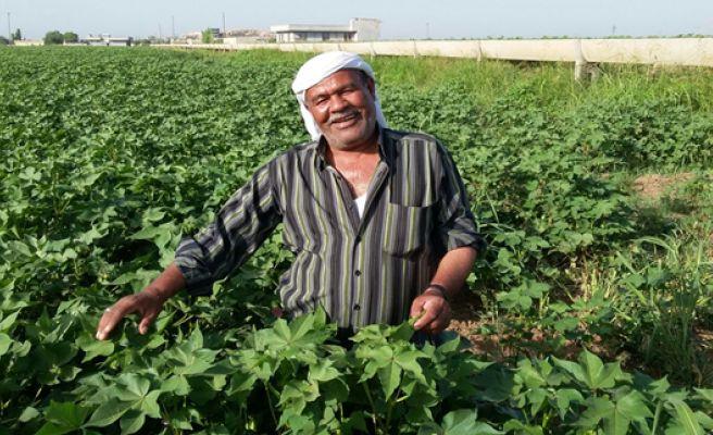 Harran Çiftçisi Fakıbaba'dan Umutlu