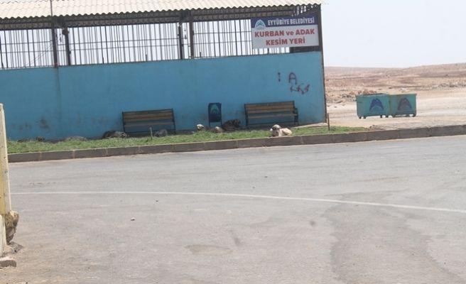 Köpekler Hayvan Pazarını Rehin Almış