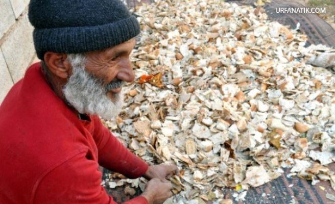 Suriyeli Mülteci Çöpten Topladığı Ekmekten Para Kazanıyor