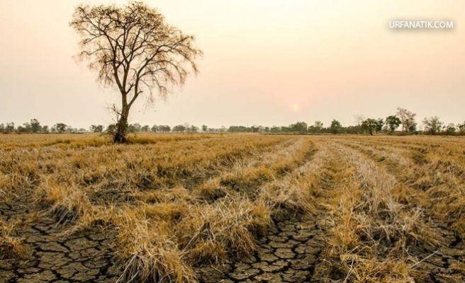 Kuraklık Bu Yıl Çiftçiyi Üzecek