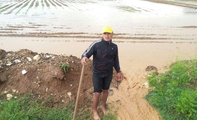 Sel Nedeniyle Ekili Tarım Arazileri Zarar Gördü