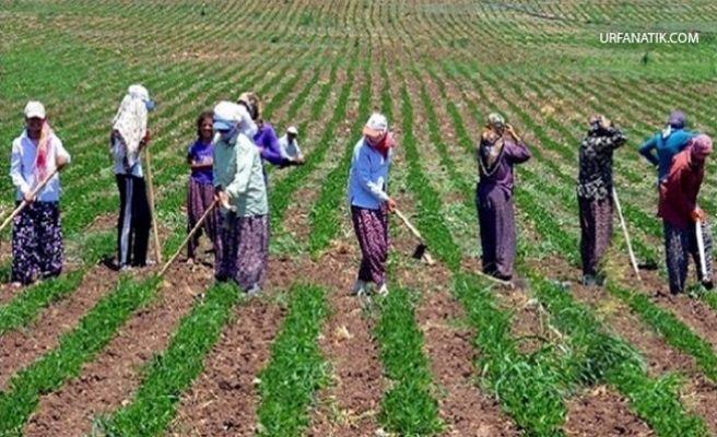 Tarım İşsizliği Düşürdü
