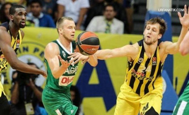 Fenerbahçe Zalgiris Kaunas Maçı, Dev Ekranla Urfa'da!