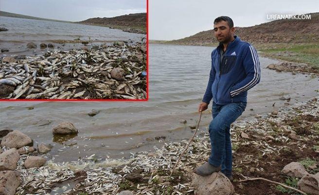 Siverek'teki Baraj Gölünde Balıklar Kıyıya Vurdu