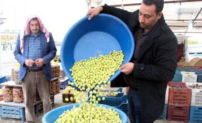 Şanlıurfa'da Yeni Mahsul Sofralık Zeytin Görücüye Çıktı