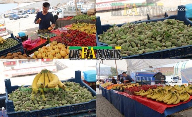 Urfa'da Badem Çağlası Çıktı! Fiyatı Dudak Uçuklatıyor