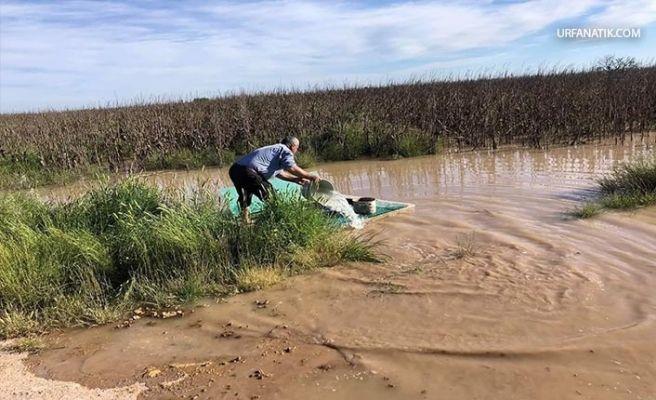 Suruç'ta Tarlaları Sel Bastı