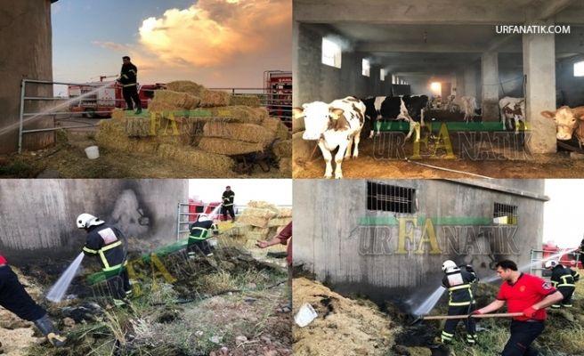 Şanlıurfa'da Samanlıkta Yangın Çıktı