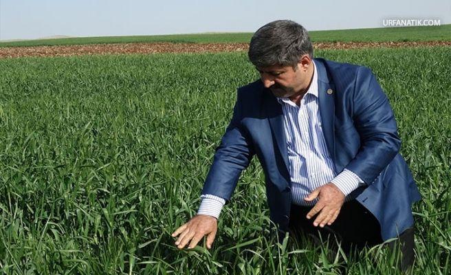 Başkan Eyyüpoğlu'ndan Çiftçilere Uyarı!