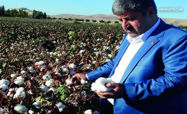 Şanlıurfa Çiftçisi Can Çekişiyor