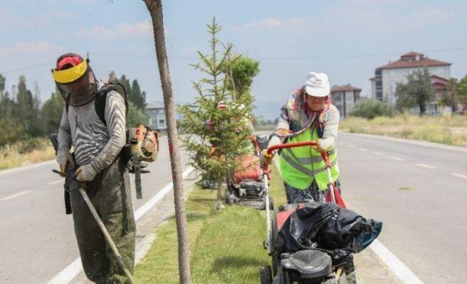 Kütahya'da yabani ot temizliği ve çim biçme çalışmaları