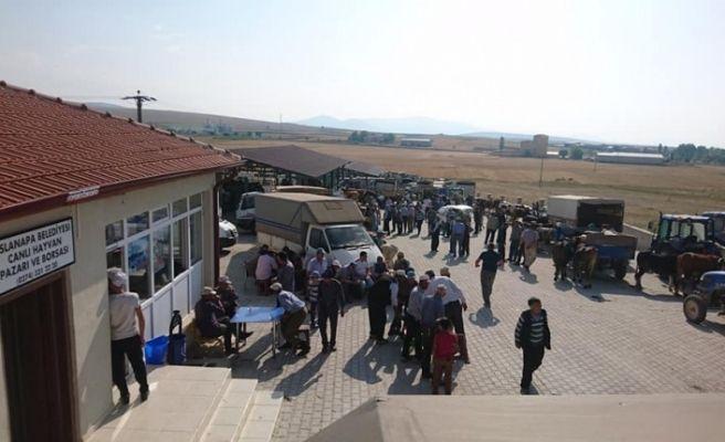Aslanapa Belediyesi Canlı Hayvan Pazarı ve Borsası 13 Ağustos'a kadar her gün açık