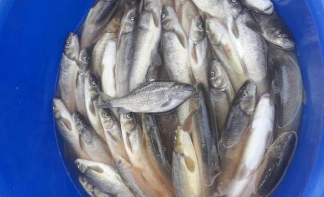 Siirt'te kaçak balık avına 9 bin 870 lira ceza