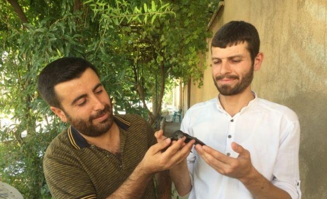 Mardin'de yaralı ebabil tedavi altına alındı