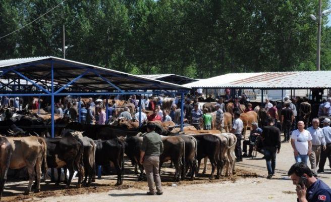 Simav'da kurban pazarı açıldı