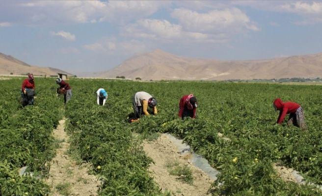 Vanlı çiftçilerin ürünleri değer buldu