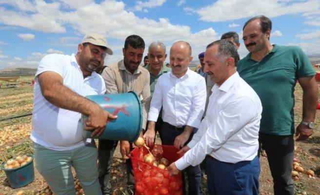 Vali Varol'dan soğan ve patates hasadı yapılan arazilerde inceleme