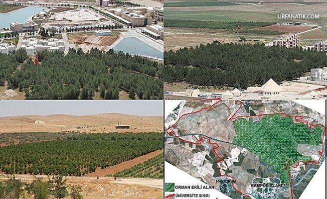 Şanlıurfa'da İkinci Büyük Orman Alanı Oluşturuldu