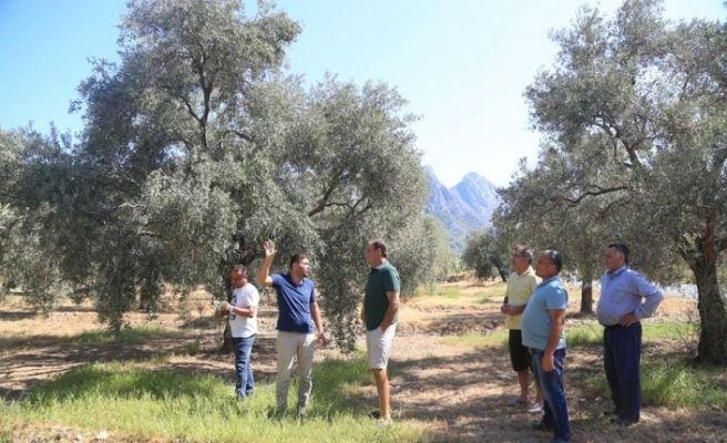 Çiftçilere zeytincilik ve narenciye yetiştiriciliği eğitimi verildi