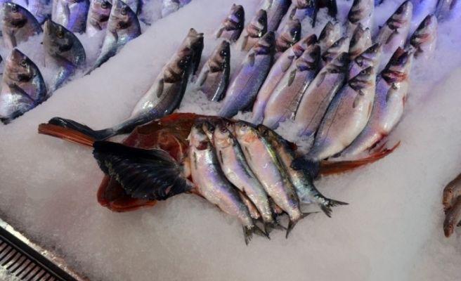 Kırlangıç balığı 50 liraya düştü