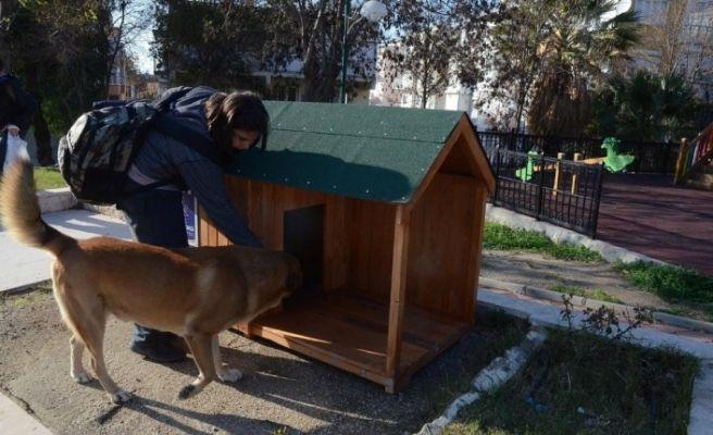 Kuşadası Belediyesi yeni yılda sokak hayvanlarını unutmadı