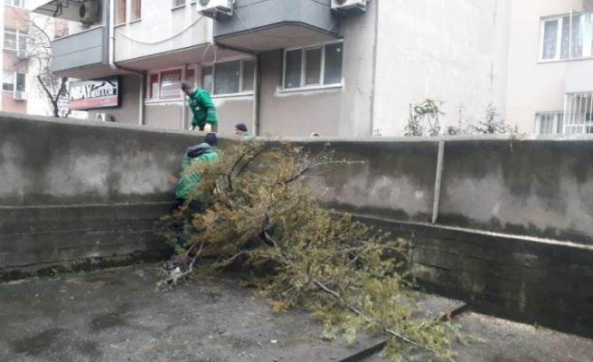 İzmit'te fırtınada devrilen ağaçlara anında müdahale