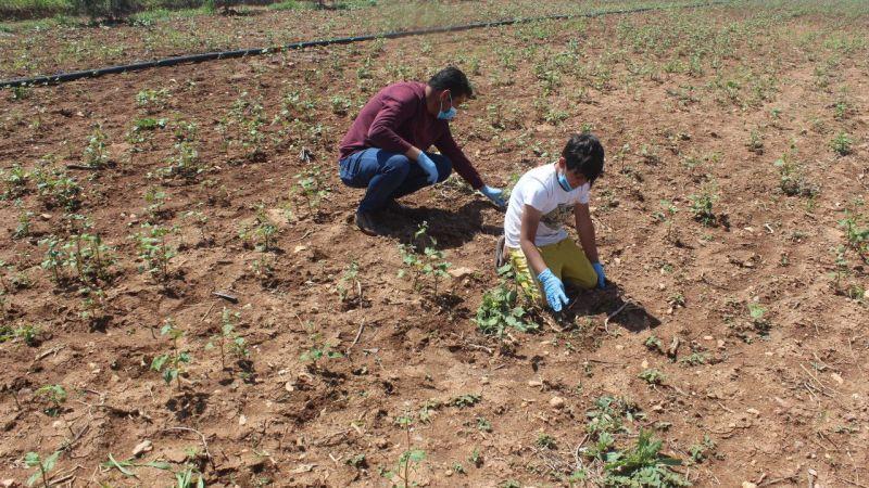 Tohumları oğlu ve ilçedeki çölyak hastaları için ekti