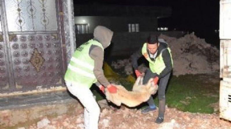 Viranşehir'de 6 çocuğa saldıran köpek bir dehşet daha saçtı!