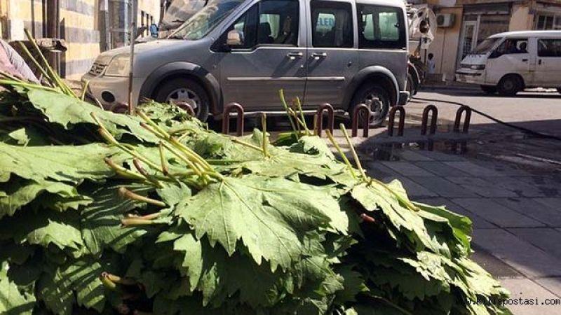 Suruç asma yaprağı pazardaki yerini aldı