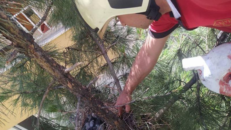 Urfa'da Yuvasından Düşen Yavru Karganın Yardımına İtfaiye Yetişti