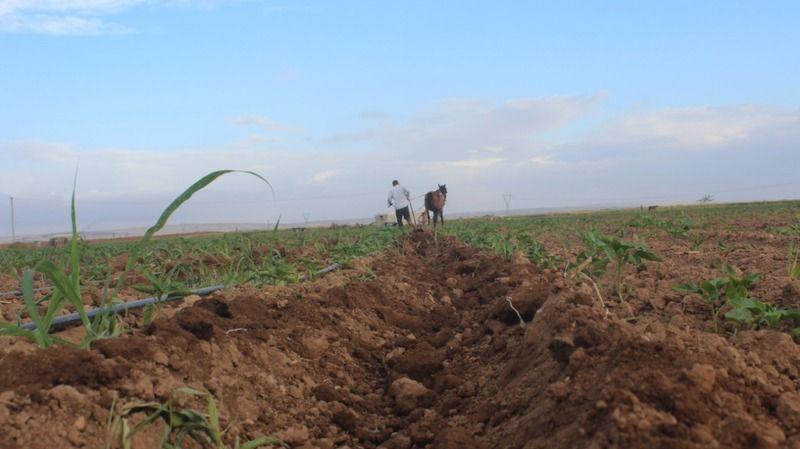 Şanlıurfa'da çiftçiler üretime devam etti